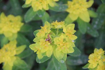 Spring-Spider-Blog-8.9.13